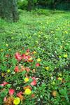 2006-04-14-042.jpg