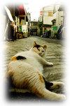 横になる猫.jpg