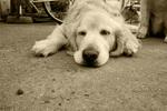 駅前の犬.jpg