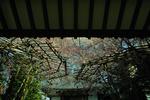 2006-03-10-002.jpg