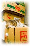 猫22.jpg